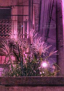 秋,夜,庭,ピンク,植物,光,ススキ,電線,コンクリート,塀,電信柱