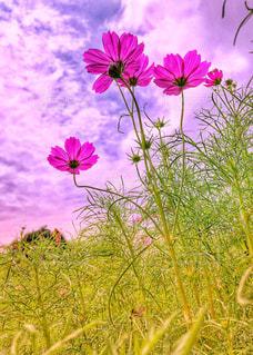 草原の写真・画像素材[1457392]