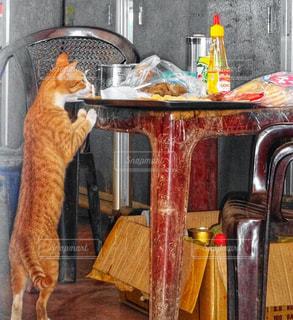 猫,椅子,テーブル,立つ,ベトナム,見つめる,狙う,肉団子,食欲の秋,盗む