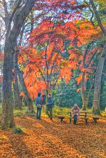 紅葉,落ち葉,秋空,空の日