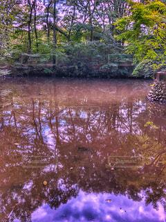 水辺,池,秋晴れ,秋空,空の日