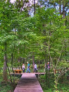 森,緑,木々,木製,歩道,秋晴れ,秋空,散策,歩行,空の日