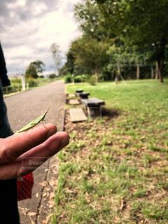 緑,手,昆虫,秋空,バッタ,空の日