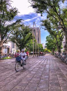 自転車,木,緑,青,高層ビル,コンクリート,人々,歩道,買い物,雨上がり,湿気,マンション,秋空,空の日