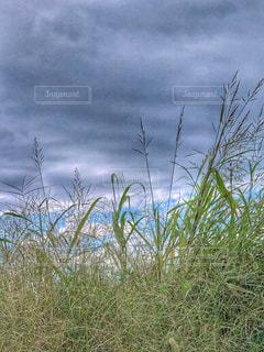 空,緑,雲,青空,葉,草,雑草,土手,休日,午後,秋の空,雨雲,秋草,空の日