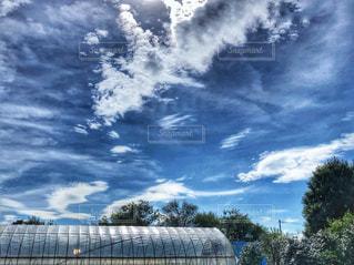 秋,木,白,雲,青,屋根,雨上がり,秋空,ビニールハウス,白雲,空の日