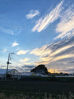 秋,木,雲,夕暮れ,夕方,猫じゃらし,畑,秋空,秋風,ビニールハウス,鉄柱,白雲,空の日
