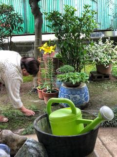 庭掃除の写真・画像素材[1488351]