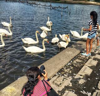 カメラ,ピンク,撮影,白鳥,ヘアゴム,バッグ,湖沼,ボーダー柄,結ぶ,ゆるふわパーマ