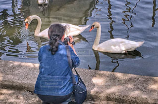 後ろ姿,白鳥,デニム,2,ビデオカメラ,湖沼,ビデオ,ゆるふわパーマ