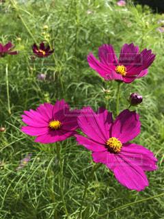 近くの花のアップの写真・画像素材[1537710]