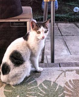 庭,室内,縁側,白黒,ねこ,野良猫,見つめる,夢,目標,飼い猫