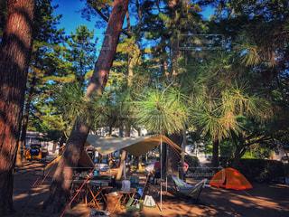 アウトドア,秋,観光,テント,キャンプ場,野外,茨城,こもれび,松林