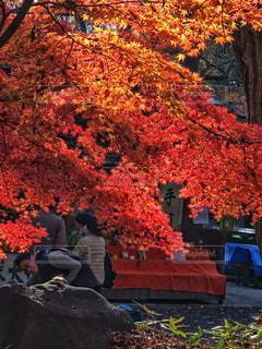 秋の小旅行🍁の写真・画像素材[1598115]