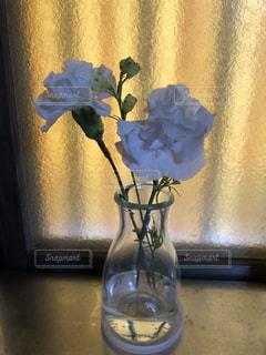花,花瓶,白い,清々しい,カーネーション,窓際,切り花,ホワイトカラー