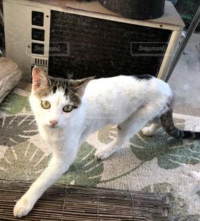 猫,庭,縁側,見つめる,前足,黒白,室外機,ホワイトカラー