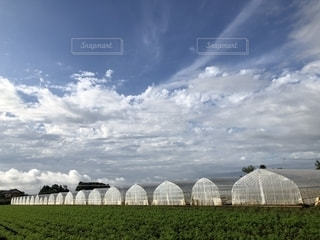 空,野菜,大地,農業,作物,広大,育てる,ビニールハウス,白雲,ホワイトカラー