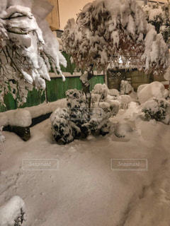 冬,木,白,寒い,大雪,積雪,1月,庭木,ホワイトカラー