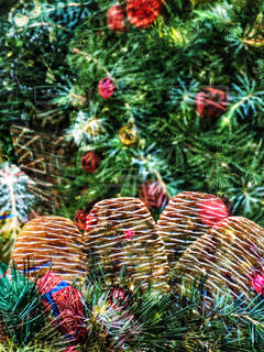 クリスマスツリーの写真・画像素材[1680571]