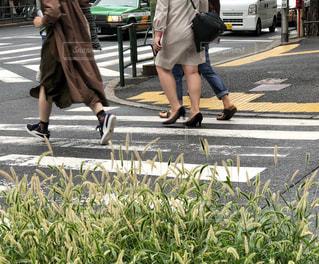 都市通りを横断人の写真・画像素材[1812787]