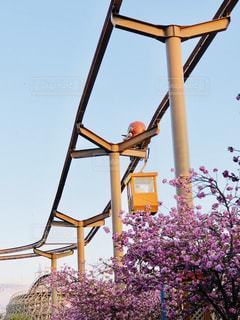 桜,ピンク,楽しい,お花見,遊園地,旅行,アトラクション,春休み,フォトジェニック