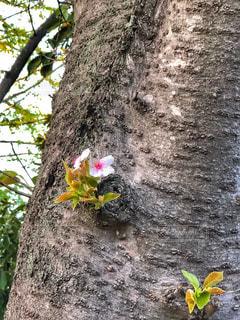 お花見の写真・画像素材[1832074]