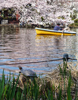 ボート池の写真・画像素材[1834045]