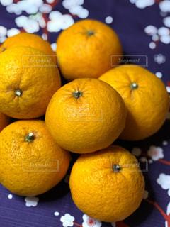 春,庭,黄色,室内,東京都,収穫,柑橘類,インスタ,フォトジェニック,甘夏,夏ミカン