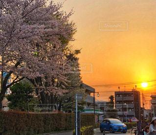 桜,夕方,満開,セピア色,4月,フォトジェニック,春色,平成最後,ミルクティーフォト