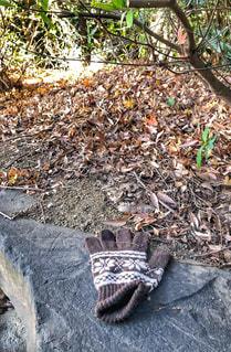 茶色,枯葉,冬景色,背景,毛糸,岩,忘れ物,手袋,ベージュ,フォトジェニック,片方,柄物,薄茶色,ミルクティー色フォト