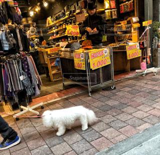 犬,散歩,子犬,多色,私と犬フォト