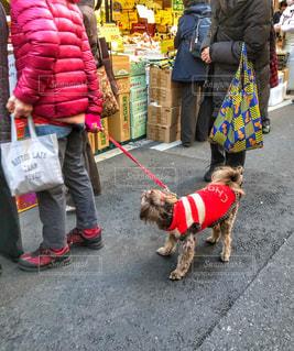 犬,散歩,歩道,赤い,フォトジェニック,多色,私と犬フォト