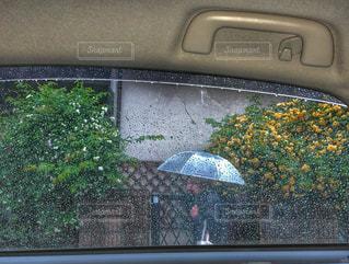 風景,建物,花,春,傘,緑,黄色,水滴,車内,ガラス,フェンス,歩行者,雨天,冷たい,ビニール傘,車窓から,家屋,外壁,フォトジェニック,雨模様,山吹,多色,令和元年,令和元日