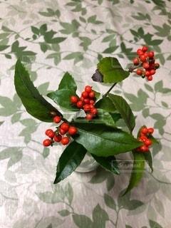 緑の葉を持つ赤い花の写真・画像素材[2733466]