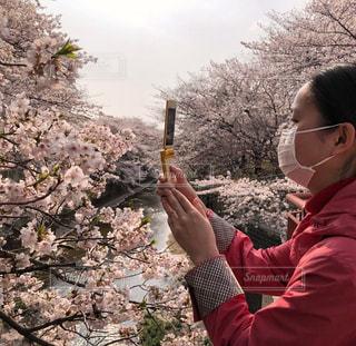 桜,屋外,ピンク,植物,撮影,満開,レトロ,樹木,横顔,桜色,川沿い,にぎやか,マスク,携帯電話,ガラケー,旧式