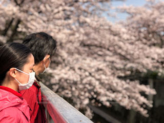 春,桜,ピンク,季節,花見,満開,未来,二人,桜色,夢,マスク,花吹雪,スタート,咲く,春先,花咲く