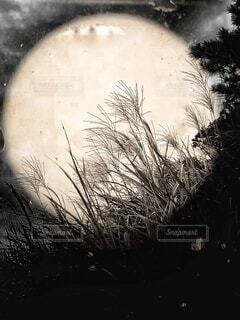 自然,風景,空,秋,夜空,屋外,植物,雲,光,ススキ,月,キラキラ,明るい,月光,輝く,あかり,お月見