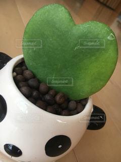 インテリア,植物,ハート