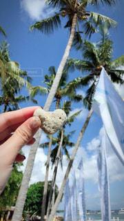 夏,ネイル,木,ビーチ,かわいい,青空,ハート,石,出会い,偶然