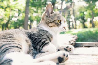 ベンチに座って猫の写真・画像素材[1272073]