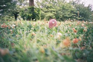 近くのお花畑の写真・画像素材[1321368]