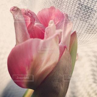 植物の上のピンクの花の写真・画像素材[2142547]