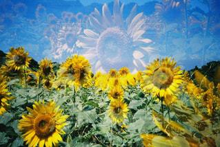 花の写真・画像素材[2143327]