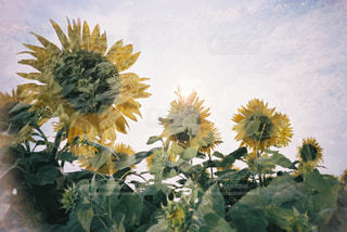 花の写真・画像素材[2143329]