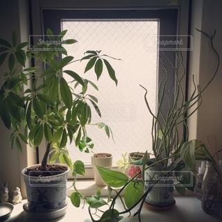植物の花瓶の写真・画像素材[2724920]