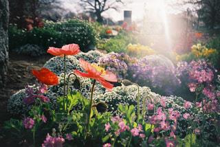 花畑のクローズアップの写真・画像素材[2857721]