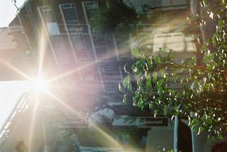 空,太陽,光,フィルム,フィルムカメラ,草木,フィルム写真