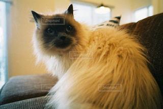 家族,猫,動物,屋内,かわいい,ペット,人物,見つめる,フィルム写真,ネコ,ネコ科の動物