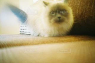 猫,動物,かわいい,ふわふわ,ペット,人物,フィルム写真,ネコ,ほわほわ,ぼけぼけ