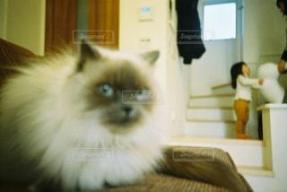 家族,猫,動物,かわいい,ペット,子猫,人物,フィルム写真,ネコ,ネコ科の動物